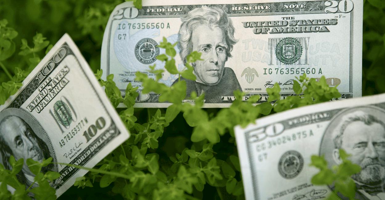 Ökologisch nachhaltige Geldanlagen – ein Überblick